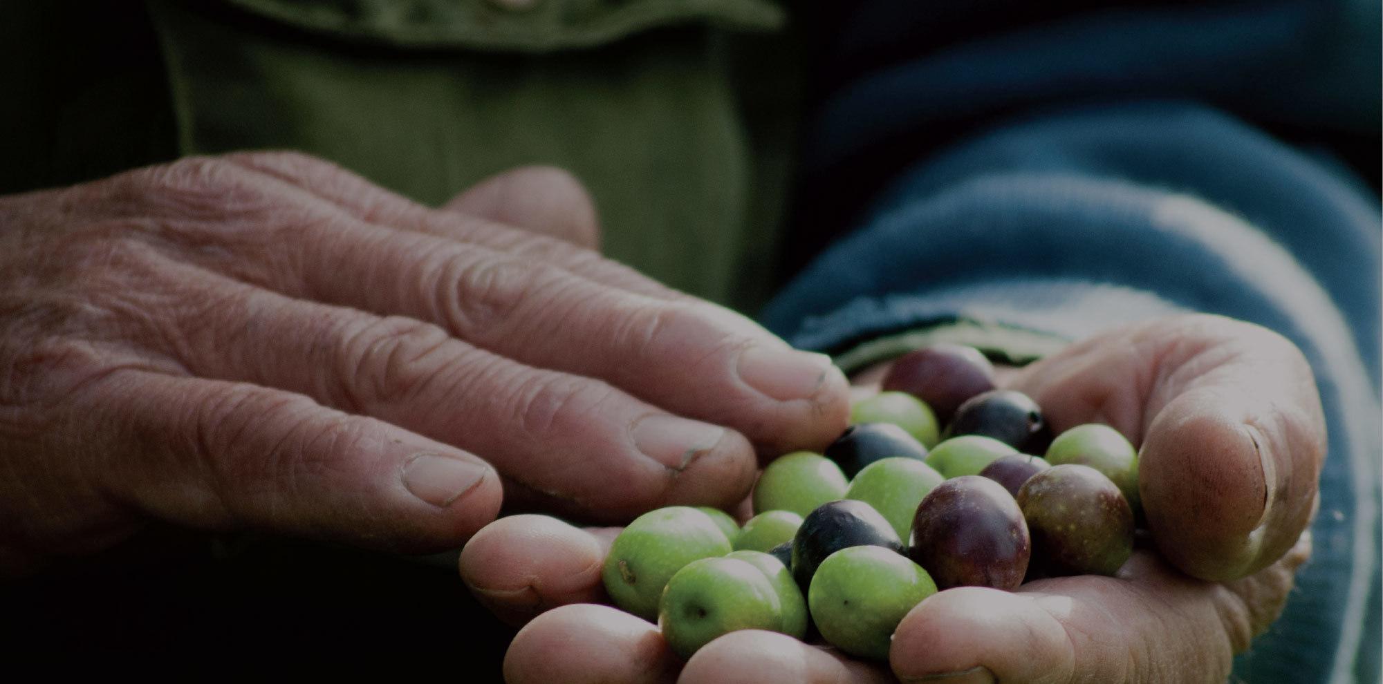 Olio extra vergine d'oliva <br>dal 1985