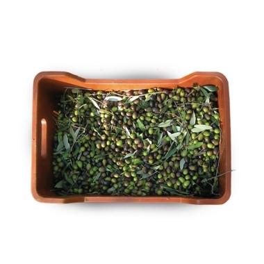 Servizio di carico-scarico e <br>possibilità di scarico olive sfuse